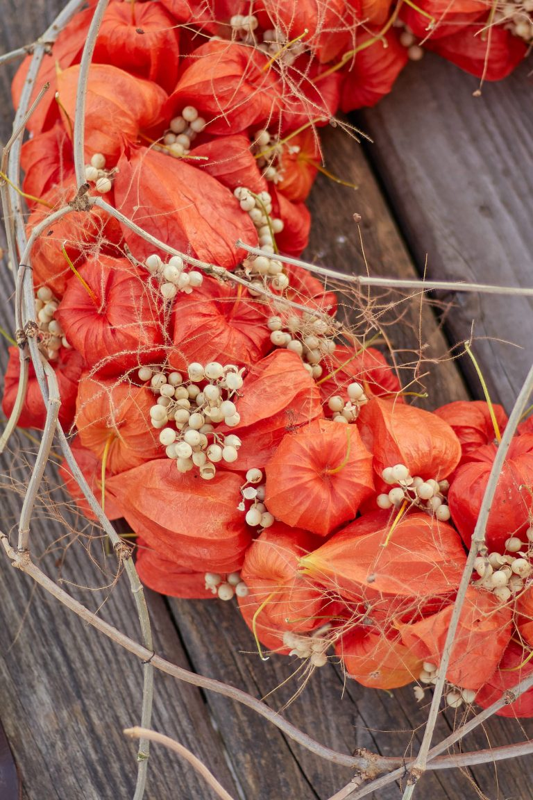Physalis wreath